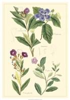 Botanical I Fine-Art Print