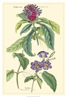 Botanical III Fine-Art Print