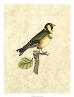 Birds I Fine-Art Print