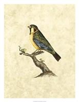 Birds II Fine-Art Print