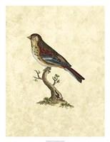 Birds IV Fine-Art Print