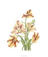 Tulip Spray I Fine-Art Print