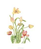 Tulip Spray II Fine-Art Print