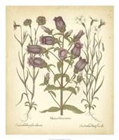 Tinted Besler Botanical II Fine-Art Print