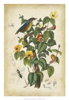 Antique Bird in Nature III Fine-Art Print