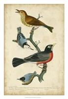 Wilson's Wood Thrush Fine-Art Print