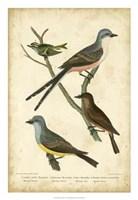 Wilson's Flycatcher Fine-Art Print