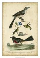 Wilson's Mockingbird Fine-Art Print