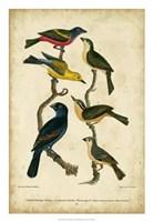 Wilson's Painted Bunting Fine-Art Print