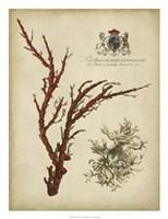 Imperial Coral I Fine-Art Print