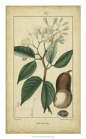 Vintage Turpin Botanical I Fine-Art Print