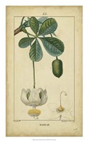 Vintage Turpin Botanical II Fine-Art Print