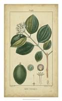 Vintage Turpin Botanical III Fine-Art Print