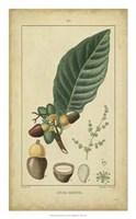 Vintage Turpin Botanical IV Fine-Art Print