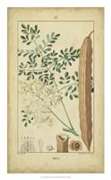 Vintage Turpin Botanical V Fine-Art Print