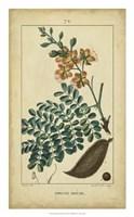 Vintage Turpin Botanical VI Fine-Art Print