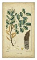 Vintage Turpin Botanical VII Fine-Art Print