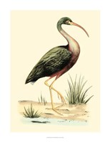 Water Birds I Fine-Art Print