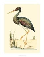 Water Birds II Fine-Art Print