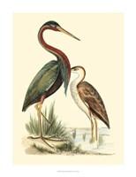 Water Birds III Fine-Art Print