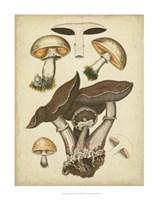 Antique Mushrooms II Fine-Art Print
