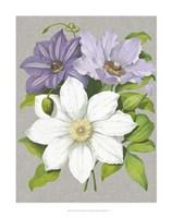 Clematis Blooms II Fine-Art Print