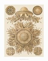 Sophisticated Sealife I Fine-Art Print
