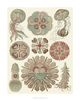 Sophisticated Sealife IV Fine-Art Print