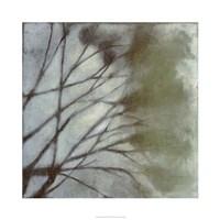Diffuse Branches II Fine-Art Print