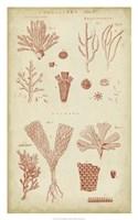 Coralline I Fine-Art Print