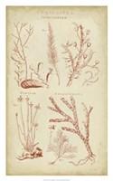 Coralline II Fine-Art Print