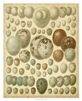 Vintage Bird Eggs I Fine-Art Print