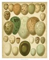 Vintage Bird Eggs II Fine-Art Print