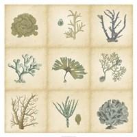 Coral Curio Fine-Art Print