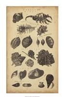 Study of Shells I Fine-Art Print