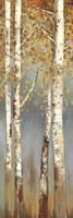 Butterscotch Birch Trees I Fine-Art Print