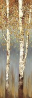 Butterscotch Birch Trees II Fine-Art Print
