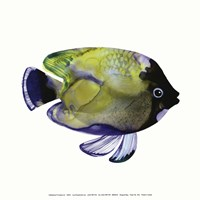 Green Fish Fine-Art Print