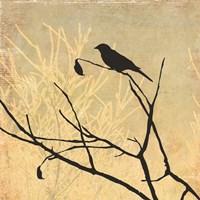 Perched Fine-Art Print