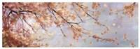 Osaka Blossoms II Fine-Art Print