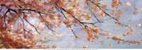 Osaka Blossoms II - Mini Fine-Art Print