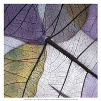 Purple and Grey Leaves II Fine-Art Print