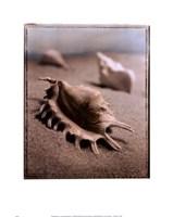Seashell III Fine-Art Print
