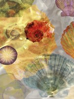 Shell Suite I Fine-Art Print