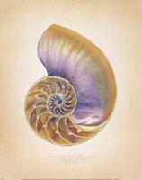 Nautilus Cross Section Fine-Art Print