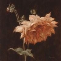 Floral Symposium III Fine-Art Print