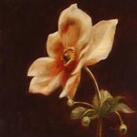 Floral Symposium IV Fine-Art Print