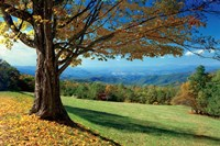 Blue Ridge Beauty Fine-Art Print