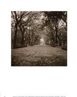 Central Park Fine-Art Print