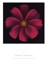 Cosmos Fine-Art Print
